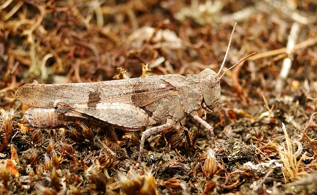 Nature, Insect, A Little, Animals, Grasshopper