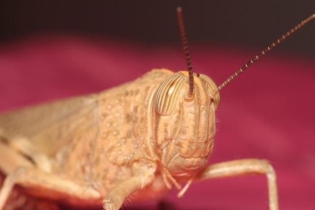 Grasshopper, Bespozvonochnoe, Insect, Nature, Animals