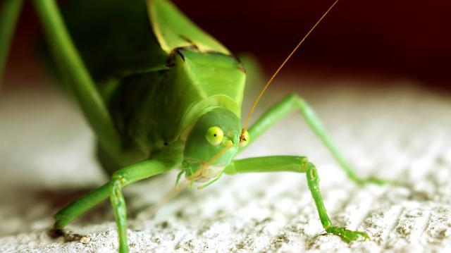 Free Photo Grasshopper Bugs Small Green Insect Green Bug