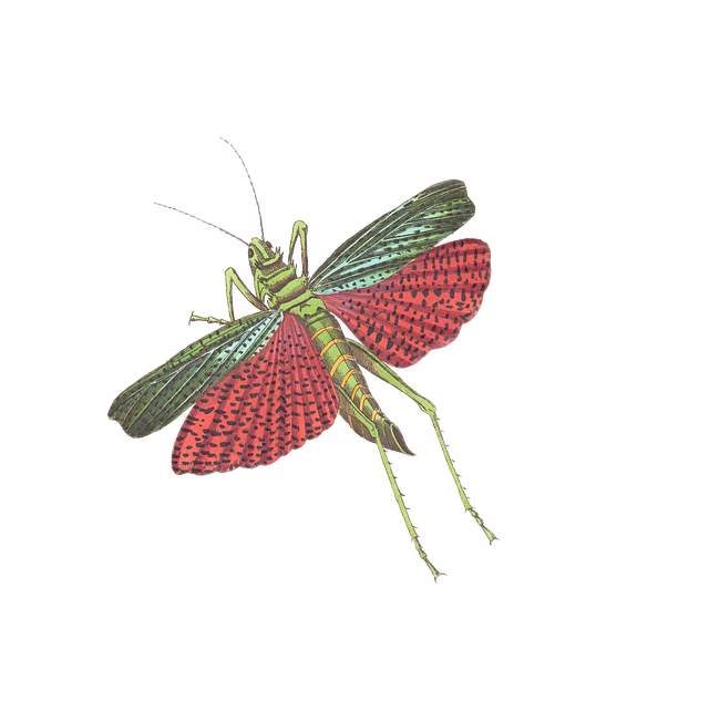 Grasshopper, Insect, Animal, Isolated, Vintage