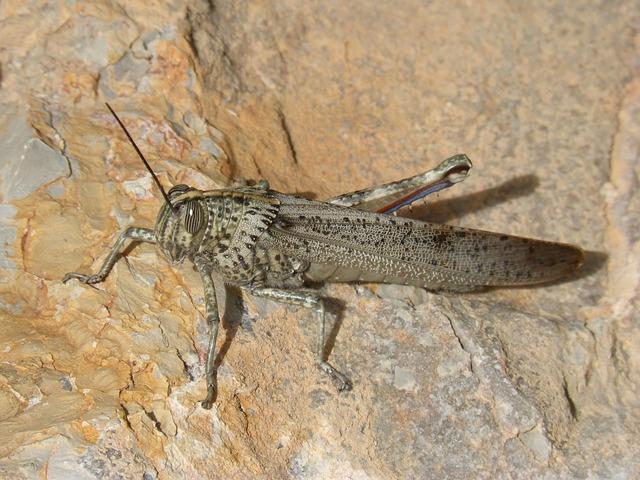 Grasshopper, Lobster, Rock, Textures, Detail