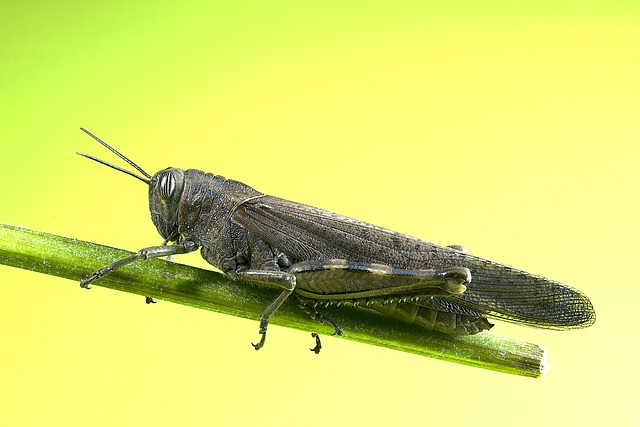 Grasshopper, Insect, Macro, He Caught, Nature