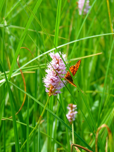 Knotweed, Reported Knotweed, Grassland Plants, Plant