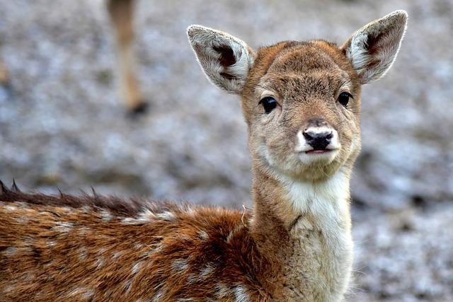 Deer, Puppy, Fawn, Bambi, Gray, Animal, Nature, Park