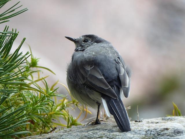 A Little Bird, Gray, Bird