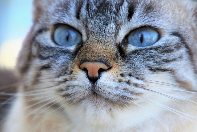 Gray Cat, Observer, Hunting, Visual Acuity, Mustache