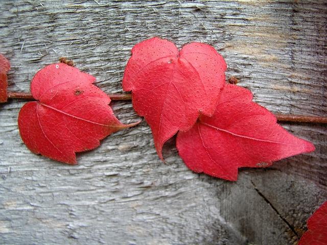 Nature, Desktop, Wood, Love, Leaf, Gray Love, Gray Wood