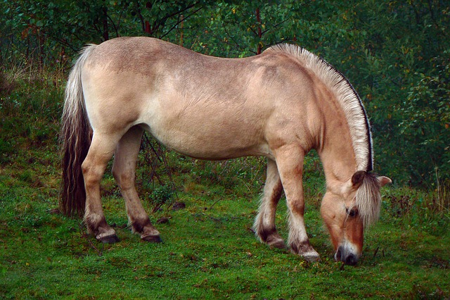 Horse, Grass, Animal, Grazing