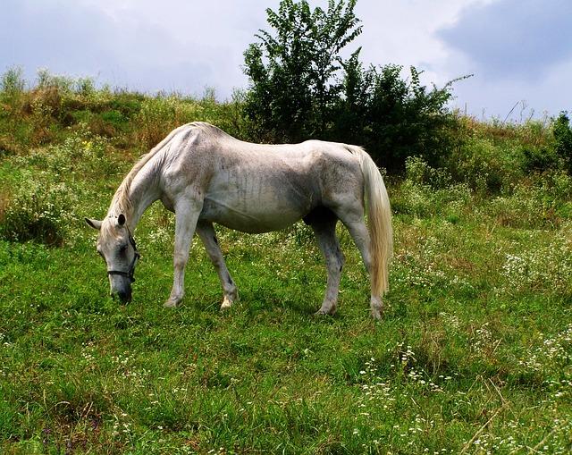 Horse, Hoofed Animals, Grazing Animals