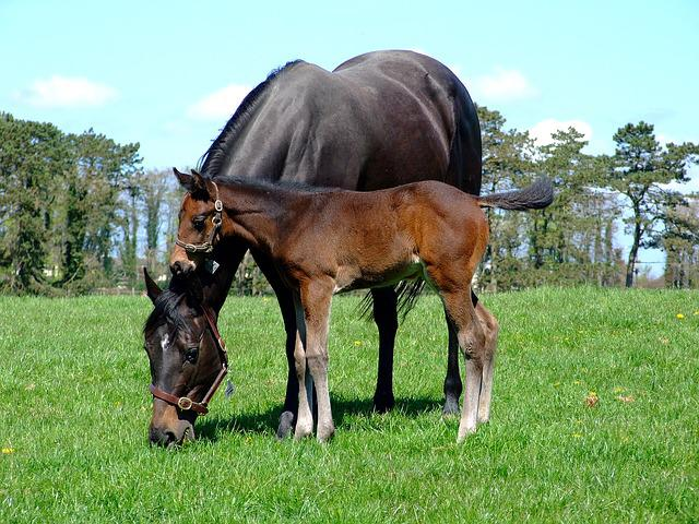 Mare, Foal, Horse, Grazing
