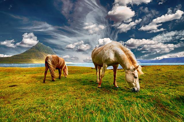 Horses, Iceland, Grazing, Landscape, Nature, Field