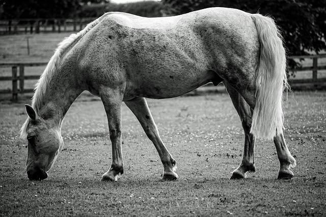 Horse, Animal, Black And White, Grazing, Landscape