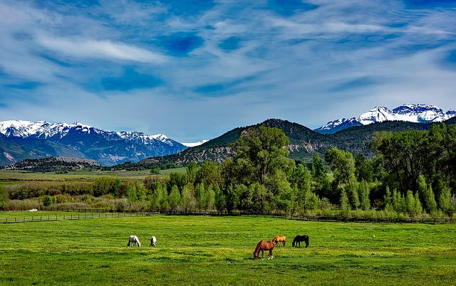 Colorado, Mountains, Horses, Grazing, Meadow, Field