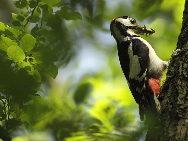 Woodpecker, Tree, Great Spotted Woodpecker, Worms