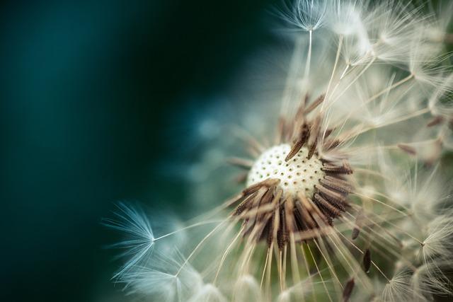 Dandelion, Macro, Gree, Flower, Nobody, Plant, Yellow