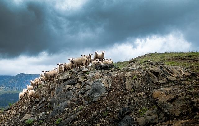 Greece, Sheep, Hill, Clouds, Herd