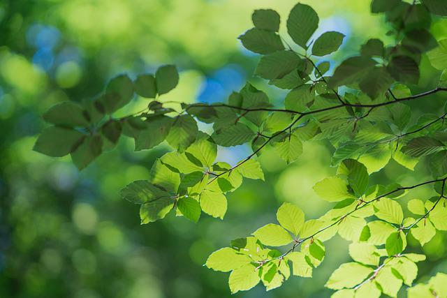 Leaves, Aesthetic, Tree, Forest, Light, Green, Color