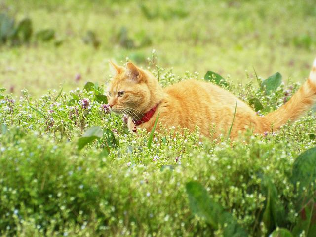 Cat, Natural, Animal, Green