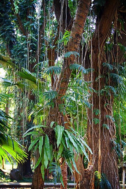 Chiang Rai, Thailand, Liane, Park, Nature, Green Area