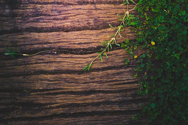 Free Photo Green Background Plant Nature Texture Wooden
