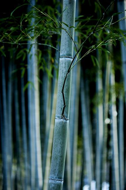 Bamboo, Nature, Forest, Japan, Chill, Green