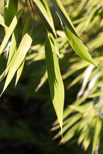 Bamboo, Leaf, Green