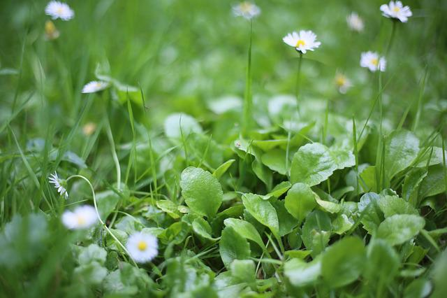 Beautiful, Green, The Scenery, Flowers And Plants