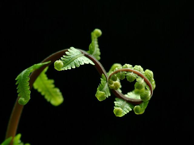 Fern, Leaves, Nature, Green, Black Leaf, Black Leaves