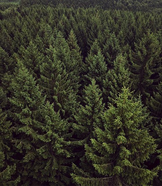 Forest, Chemnitz, Green, View, Landscape, Nature