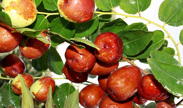 Jujube, Food, Green Dates