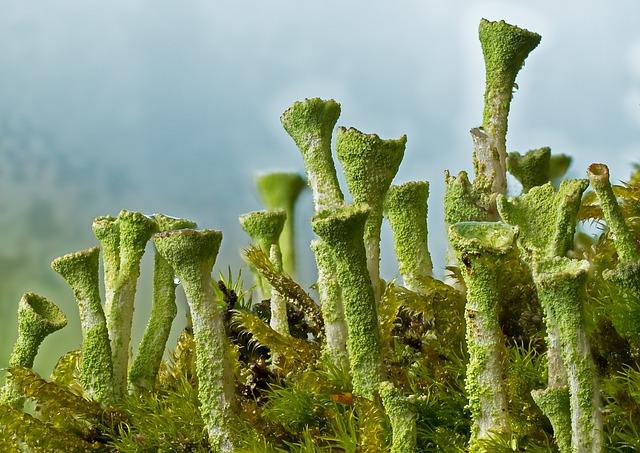 Trumpet Lichen, Lichen, Moss, Macro, Green, Dead Wood