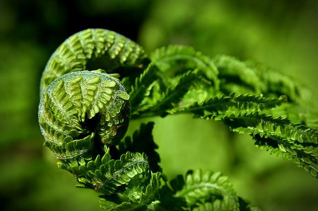 Fern, Plant, Green, Nature