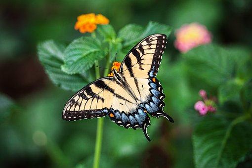 Butterfly, Summer, Flower, Green, Nature, Floral