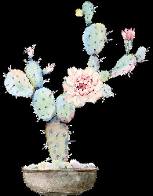 Cactus, Torn, Green, Flower