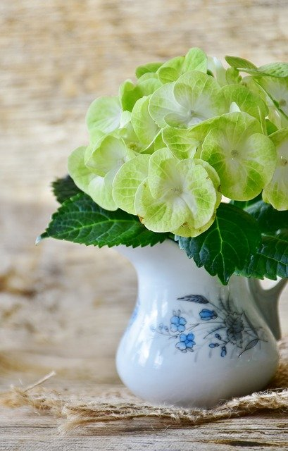 Hydrangeas, Flowers, Yellow, Green, Flower, Garden