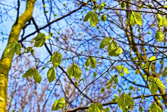 Branch, Tree, Foliage, Leaves, New Leaves, Green