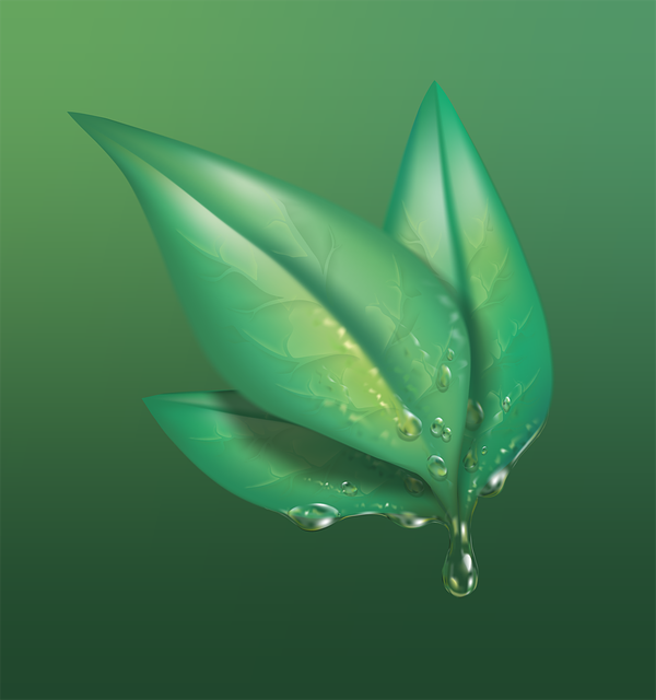 Leaf, Green, Nature, Plant, Foliage, Drop Of Water, Wet