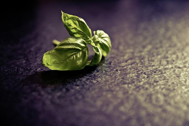 Basil, Spice, Plant, Food, Green, Herbs, Kitchen Spice