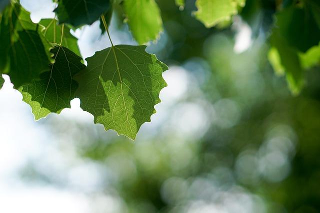 Leaves, Tree, Light, Green, Forest, Nature, Aesthetic
