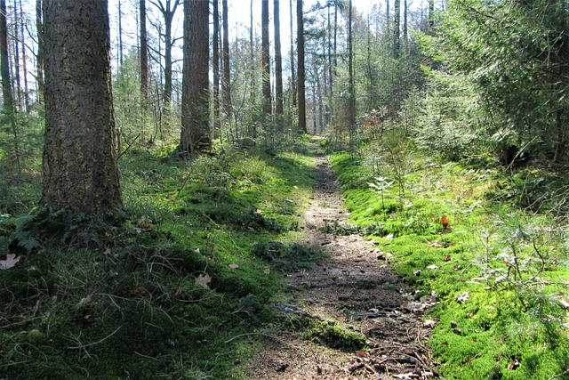 Forest, Hiking, Trees, Path, Nature, Green, Outdoor