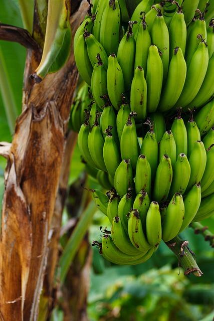 Food, Fruit, Fresh, Green, Nature, Plantation, Tropical