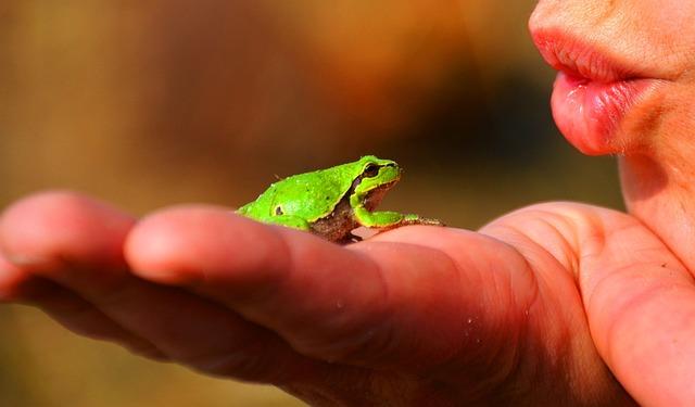 Frog Prince, Frog, Tree Frog, Amphibians, Green, Hand