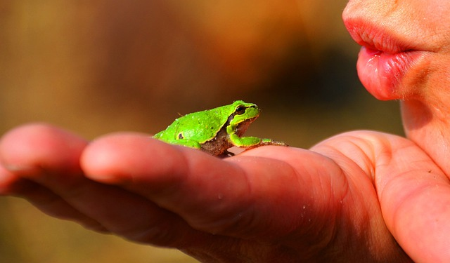 Frog Prince, Frog, Tree Frog, Amphibians, Green, Hand