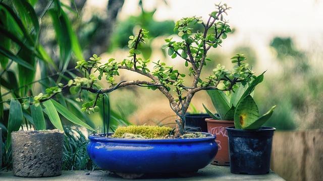 DIY Bonsai Tree