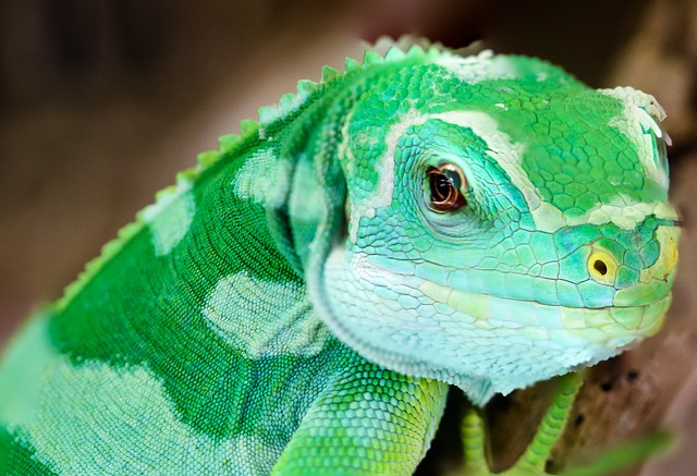 Animal, Gecko, Lizard, Green, Insect Eater, Reptile