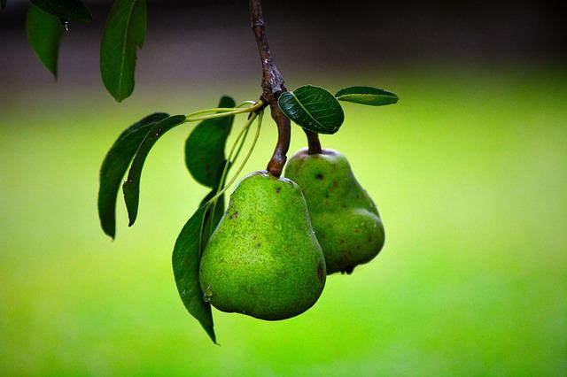Pear, Fruit, Green, Green Leaves