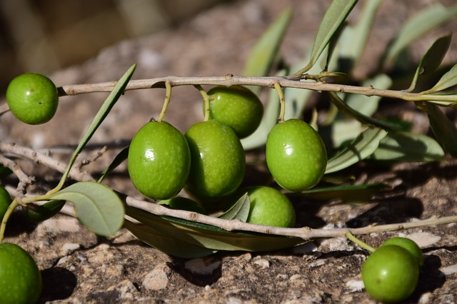 Olives, Green, Green Olives, Mediterranean, Nature