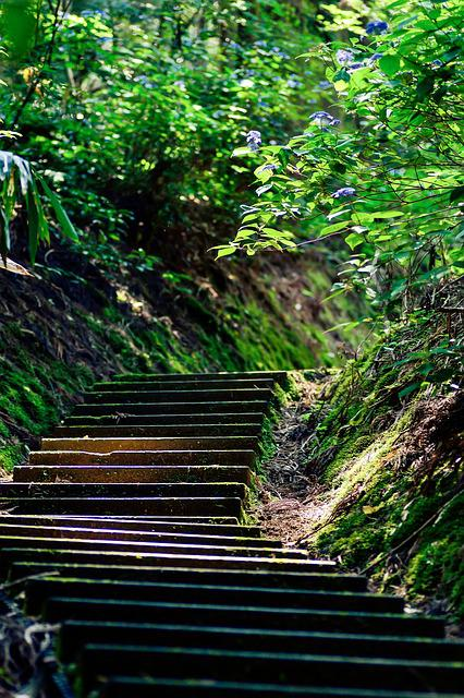 Japan, Stairs, Green, Natural, Hydrangea, Mountain