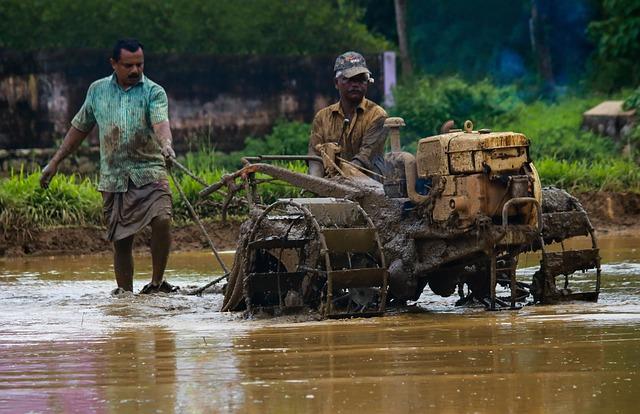 Kerala, Outdoor, Cultivating, India, Green, Farmland
