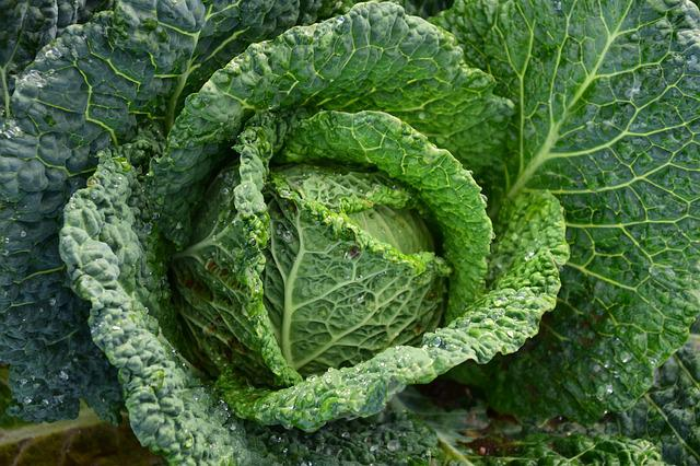 Savoy, Savoy Cabbage, Healthy, Vegetables, Kohl, Green